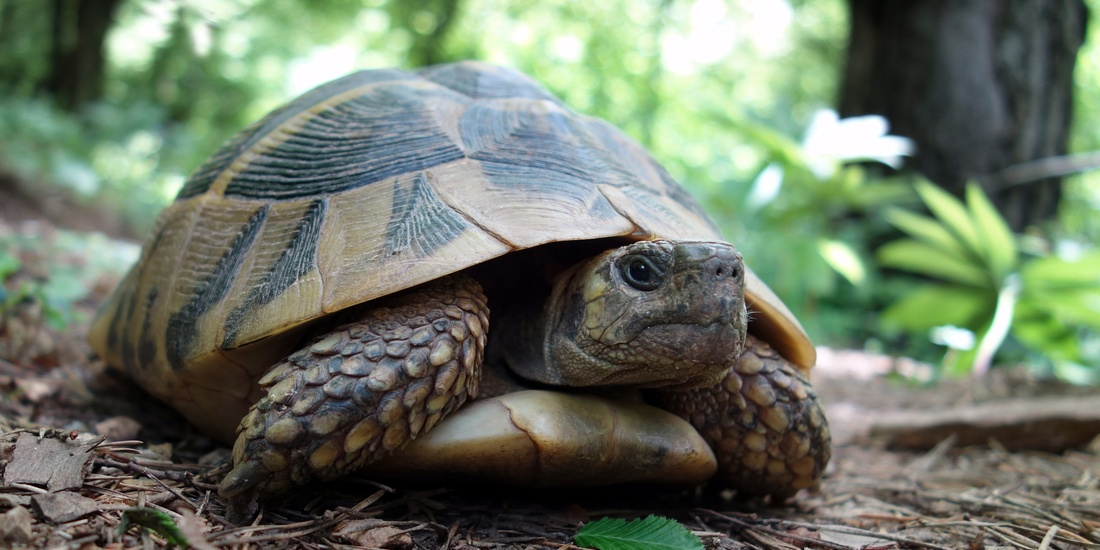 We might look slow but we have the know how to conserve energy.    We can do the same for you!